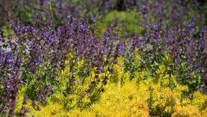 Превью обои дикие цветы, цветы, растения, макро, яркий