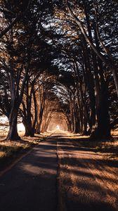 Превью обои дорога, деревья, тень
