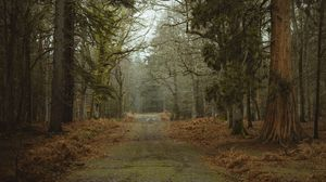 Превью обои дорога, грязь, деревья, лес, природа