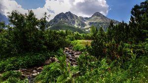 Превью обои джунгли, камни, растительность, горы