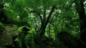 Превью обои джунгли, лес, дебри, зеленый, мох, лианы, заросли