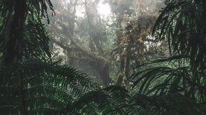 Превью обои джунгли, лес, туман, деревья, кусты, тропики