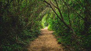 Превью обои джунгли, тропинка, деревья, кусты, природа