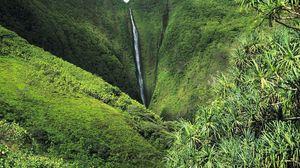 Превью обои джунгли, водопад, зелень, деревья, растительность