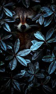 Превью обои енот, листья, маскировка