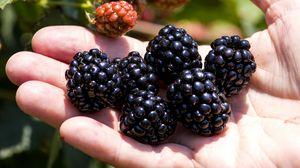 Превью обои ежевика, ягода, рука, фрукт