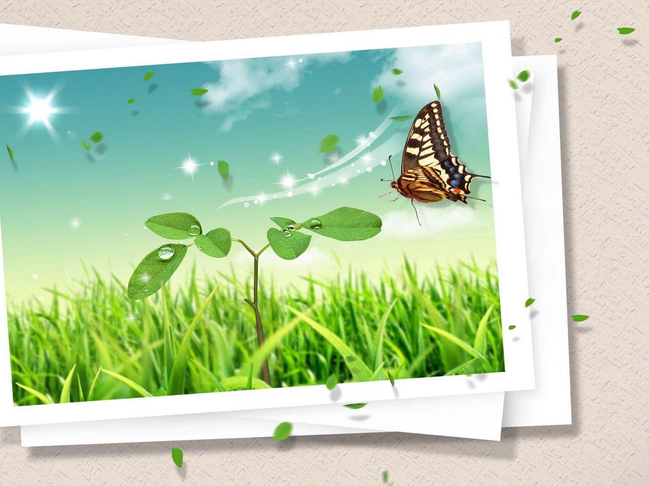 1280x960 Обои фотокарточка, бабочка, клипарт