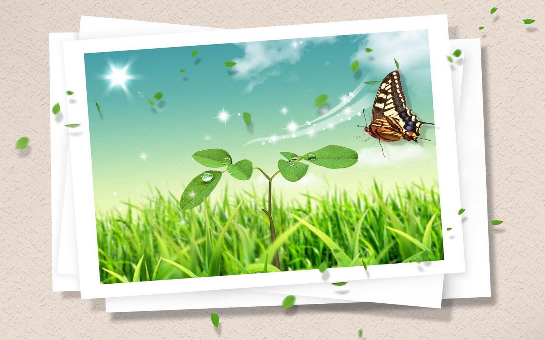 1440x900 Обои фотокарточка, бабочка, клипарт