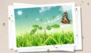 Превью обои фотокарточка, бабочка, клипарт