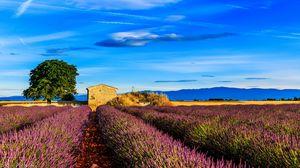 Превью обои франция, прованс, поле, трава, небо