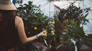 Превью обои фрукты, дерево, рука, теплица