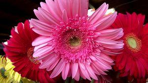 Превью обои герберы, цветы, букет, много, крупный план