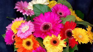 Превью обои герберы, цветы, букет, яркие, красочные