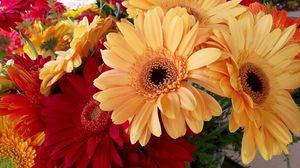 Превью обои герберы, цветы, букет, яркие, красота