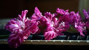 Превью обои гладиолус, розовый, пианино, клавиши