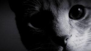 Превью обои глаза, кошка, мордочка, нос, чб, шерсть