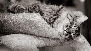 Превью обои глаза, кот, лапы, мордочка, нос, окрас, усы, шерсть, чб