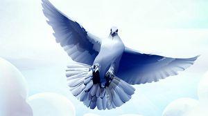 Превью обои голубь, птица, перья, полет, взмах