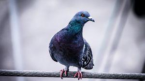 Превью обои голубь, птица, провод, сидеть