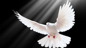Превью обои голубь, размах, крылья, свет, чёрный фон, свобода