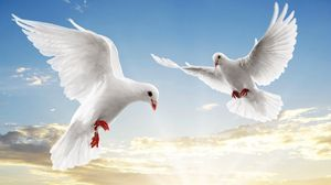 Превью обои голуби, белый, пара, полет, небо, голубой, свет