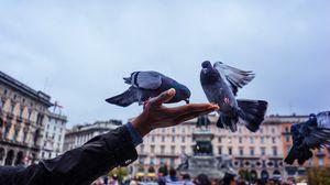 Превью обои голуби, кормление, рука
