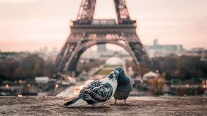 Превью обои голуби, пара, эйфелева башня