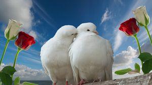 Превью обои голуби, пара, розы, небо, любовь