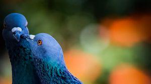 Превью обои голуби, птицы, любовь, поцелуй