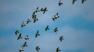 Превью обои голуби, птицы, стая, небо