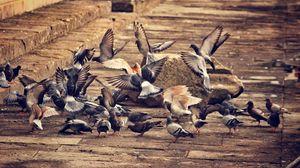 Превью обои голуби, птицы, стая птиц, город