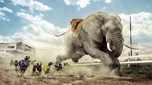 Превью обои гонка, соревнование, собака, слон, песок, дорожка, небо, облако, клыки, забег, дом, здание, стекло, фонари, трава, забор