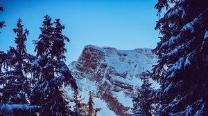 Превью обои гора, пик, снег, заснеженный, ветки