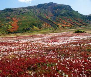 Превью обои гора, поле, цветы, пейзаж