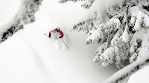 Превью обои горные лыжи, спуск, снег, экстрим, деревья, ели