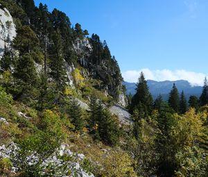 Превью обои горы, деревья, лес, природа, зеленый