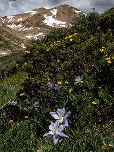 Превью обои горы, цветы, пейзаж, природа