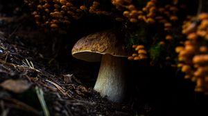 Превью обои гриб, грибы, земля, мох, макро, природа