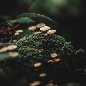 Превью обои грибы, мох, размытость, макро