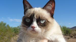 Превью обои grumpy cat, кот, недовольный