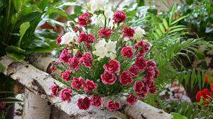 Превью обои гвоздики, цветы, букет, композиция, береза, зелень, красота