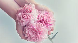Превью обои гвоздики, цветы, руки, розовый
