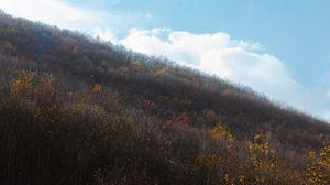 Превью обои холм, склон, деревья, кусты, растительность