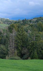 Превью обои холмы, деревья, лес, природа, зелень