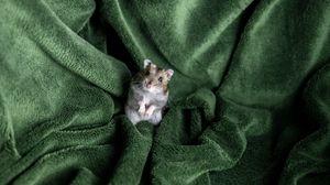 Превью обои хомяк, грызун, одеяло, питомец
