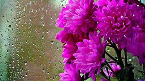 Превью обои хризантемы, цветы, букет, стекло, капли, дождь