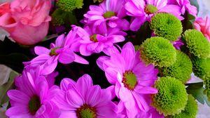 Превью обои хризантемы, роза, цветы, крупный план, яркие
