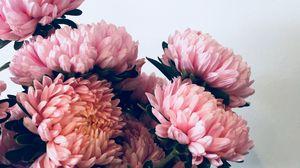 Превью обои хризантемы, цветы, букет, розовый