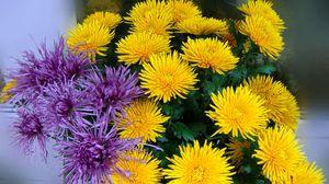 Превью обои хризантемы, желтые, сиреневые, букет