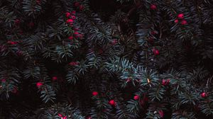 Превью обои хвоя, ягоды, красный, растение